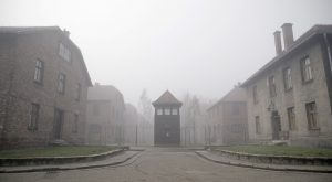 Cinematography by Harris Done, from Auschwitz